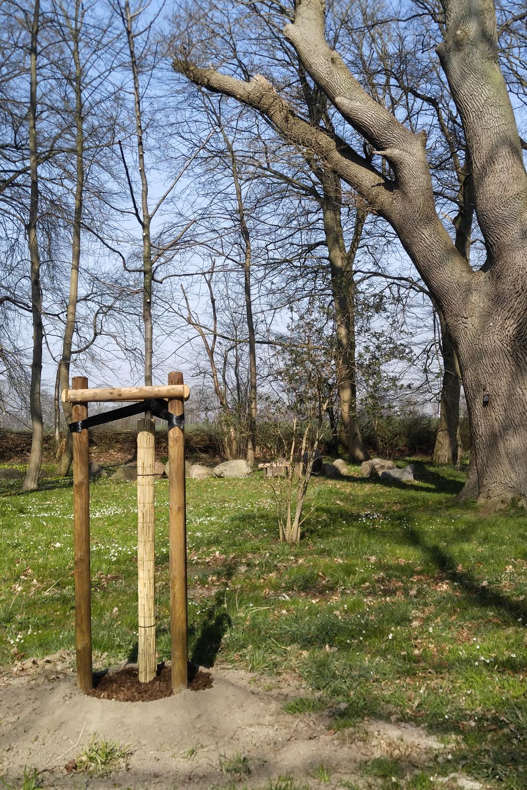 200328_neue bäume 2